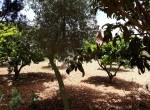 fruit trees garcen